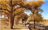 苍天般的阿拉善之三胡杨树