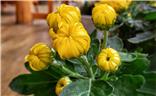花苞:生长的孕育