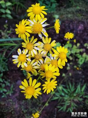 【花花世界】+花彩多色