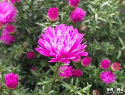 【花花世界】+花儿与蜜蜂