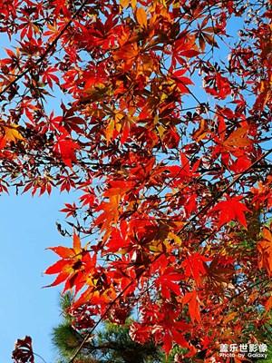 清凉寨秋景