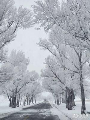 【与美好相遇】+雪树下的等待