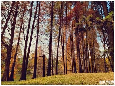 广州华南植物园