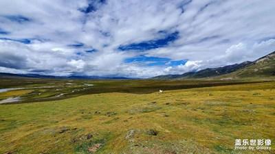 美丽的康巴大草原