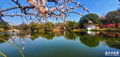 东湖一角之梅园