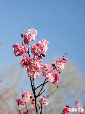 春天啦。。。。。。!