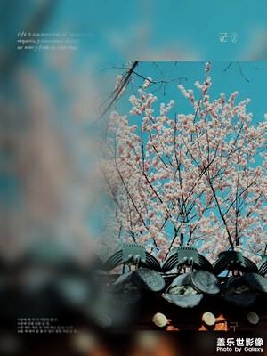 武汉春天,花香满屏