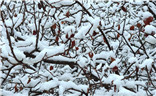 牛年第一场雪之二