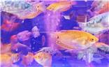 Galaxy S10+ 游泳的鱼儿