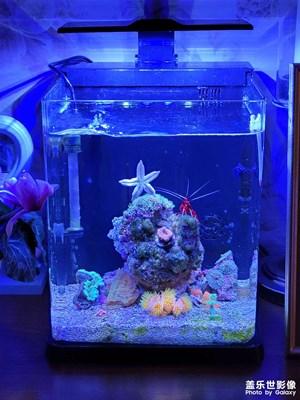 小小海鱼缸