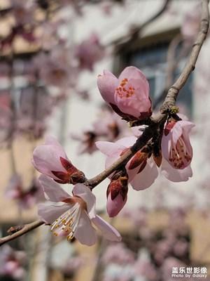 新春新气象