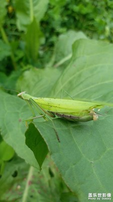 【角度与视觉】+绿螳螂