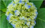 九龙潭的花卉