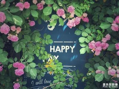 满jia蔷薇一院香