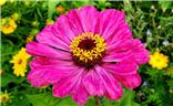 五彩斑斓的夏天,百花争艳忙碌的蜜蜂