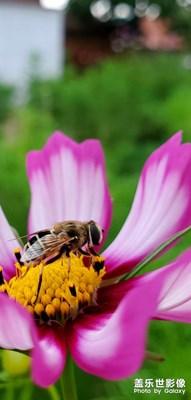 随手拍~蜜蜂少女队