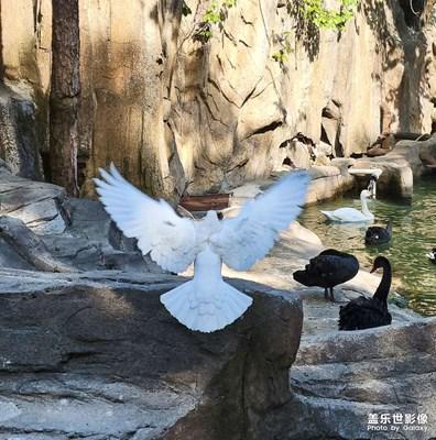 【夏了夏天】鸽子