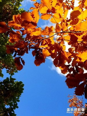 【相机里的国庆】+再见秋色