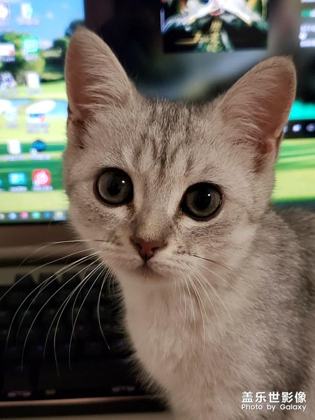 听说有人喜欢猫?