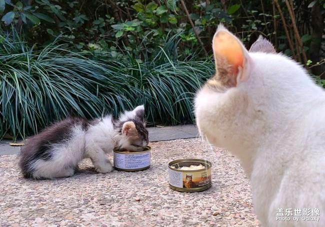 拍的流浪猫