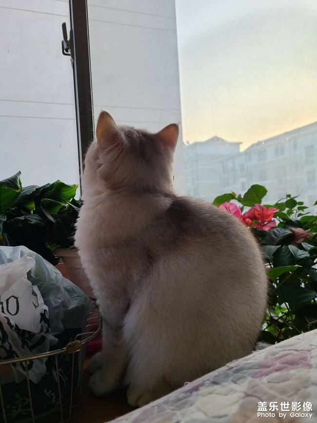 家有胖猫3