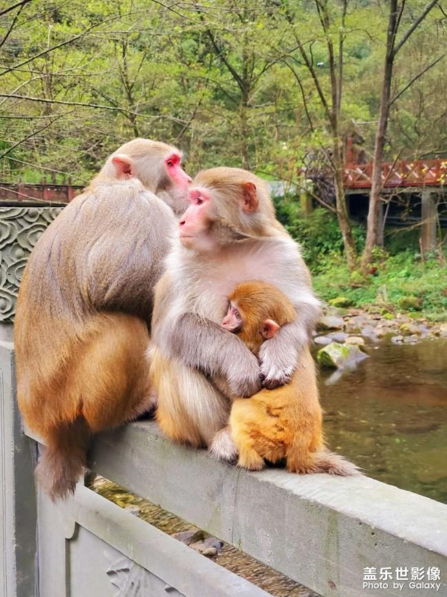 猴儿一家子