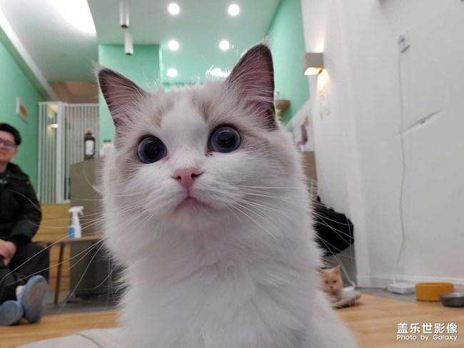 #吸猫#猫想撸猫咖