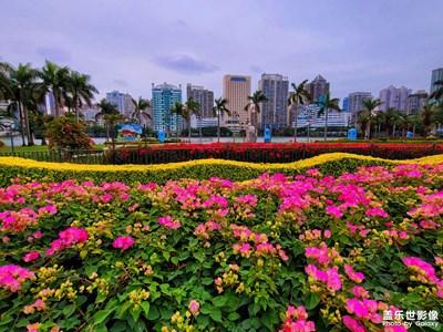 厦门的市花……三角梅